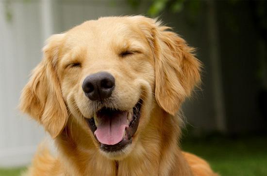 Οι σκύλοι έχουν αισθήματα...