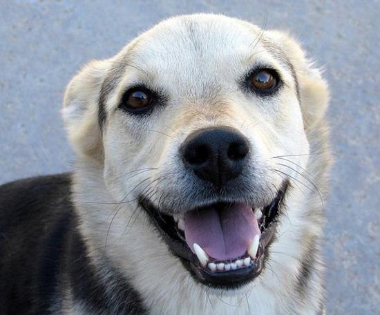 Χαρούμενοι σκύλοι (7)