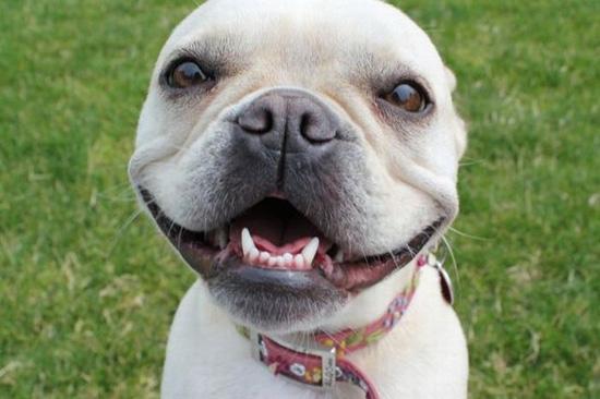Χαρούμενοι σκύλοι (8)