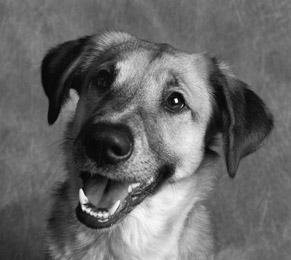 Χαρούμενοι σκύλοι (10)