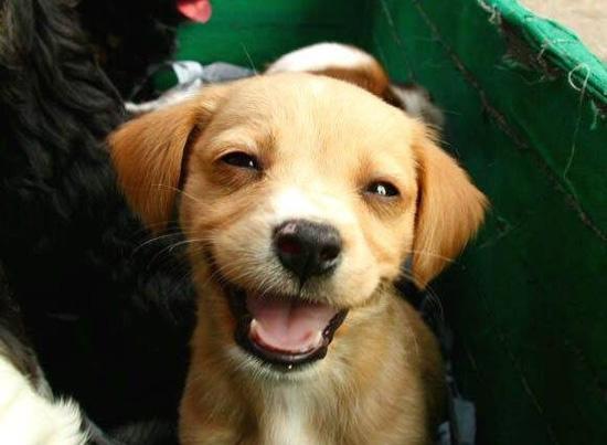 Χαρούμενοι σκύλοι (11)