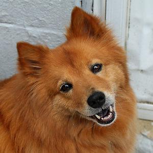 Χαρούμενοι σκύλοι (12)