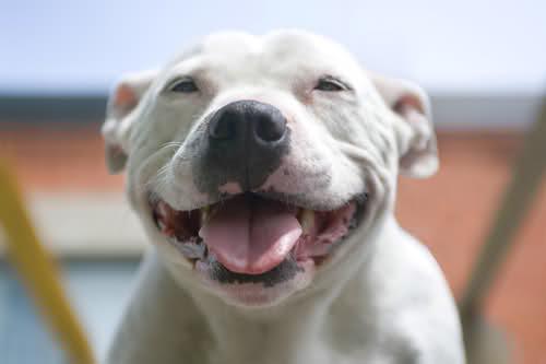 Χαρούμενοι σκύλοι (13)