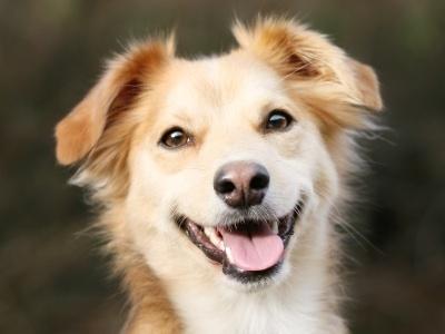 Χαρούμενοι σκύλοι (14)