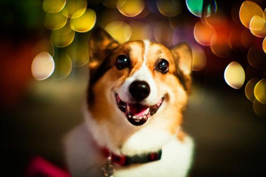 Χαρούμενοι σκύλοι (17)
