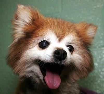 Χαρούμενοι σκύλοι (18)