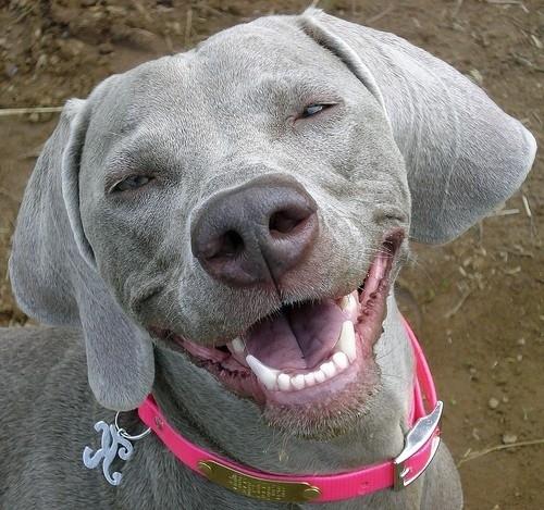 Χαρούμενοι σκύλοι (20)