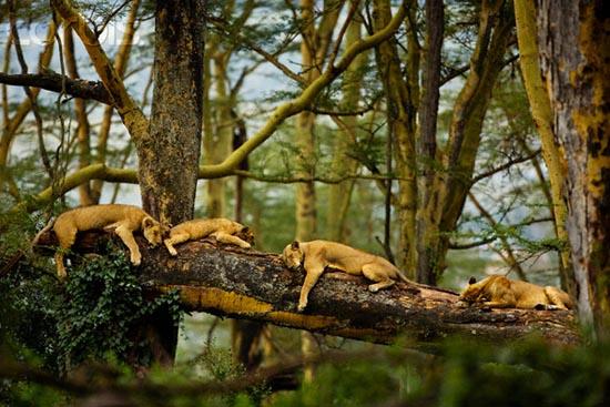 Ζώα που... φυτρώνουν σε δέντρα (1)