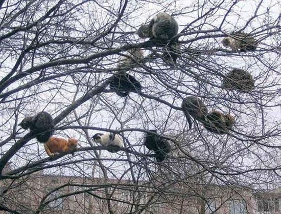 Ζώα που... φυτρώνουν σε δέντρα (2)