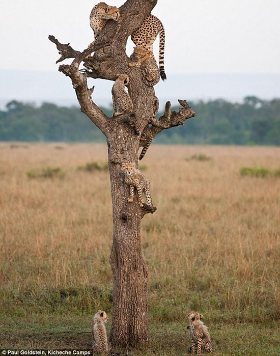 Ζώα που... φυτρώνουν σε δέντρα (3)