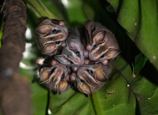 Ζώα που... φυτρώνουν σε δέντρα (4)