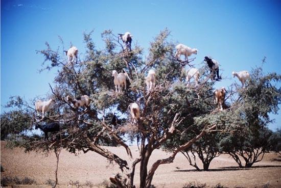 Ζώα που... φυτρώνουν σε δέντρα (5)