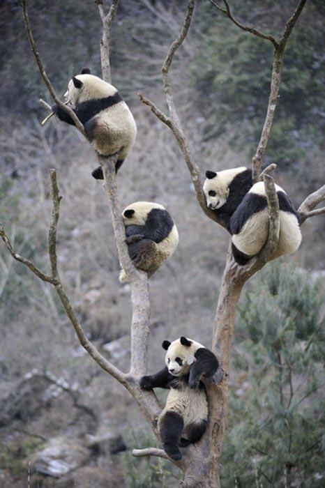 Ζώα που... φυτρώνουν σε δέντρα (6)