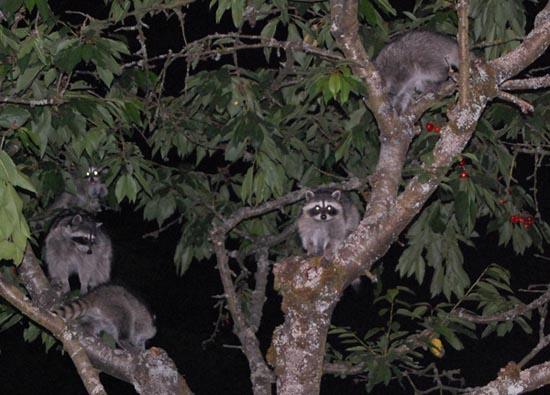 Ζώα που... φυτρώνουν σε δέντρα (7)