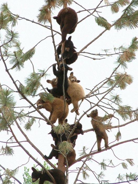 Ζώα που... φυτρώνουν σε δέντρα (8)