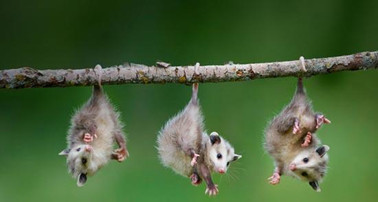 Ζώα που... φυτρώνουν σε δέντρα (9)