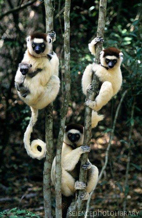 Ζώα που... φυτρώνουν σε δέντρα (10)
