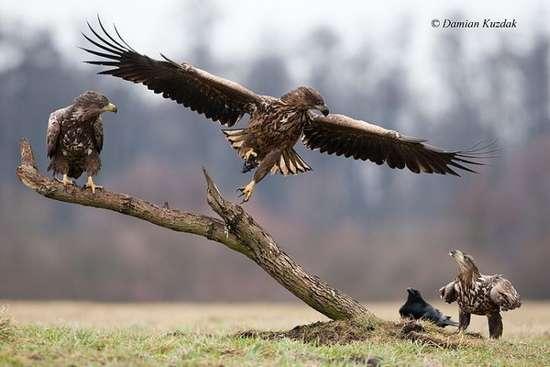 Πως γίνονται οι φωτογραφήσεις στην άγρια φύση (9)
