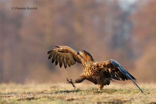 Πως γίνονται οι φωτογραφήσεις στην άγρια φύση (10)