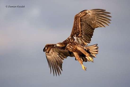 Πως γίνονται οι φωτογραφήσεις στην άγρια φύση (11)