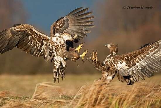 Πως γίνονται οι φωτογραφήσεις στην άγρια φύση (12)