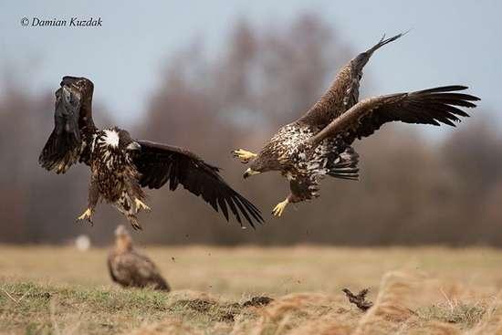Πως γίνονται οι φωτογραφήσεις στην άγρια φύση (13)