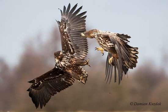 Πως γίνονται οι φωτογραφήσεις στην άγρια φύση (14)