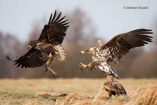 Πως γίνονται οι φωτογραφήσεις στην άγρια φύση (15)