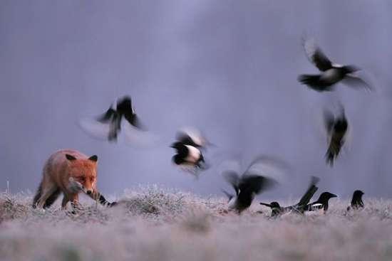 Πως γίνονται οι φωτογραφήσεις στην άγρια φύση (17)