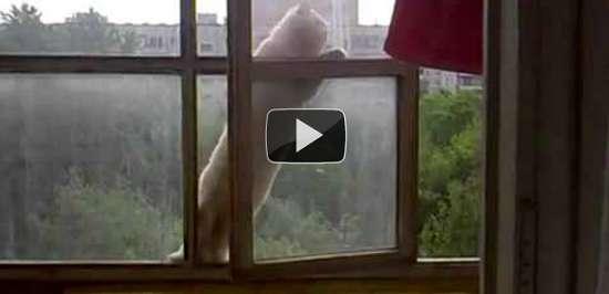 Γάτα διαρρήκτης