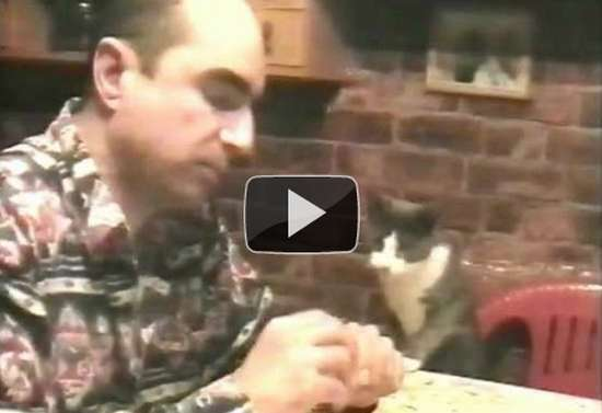 Γάτα που ξέρει τη νοηματική γλώσσα!