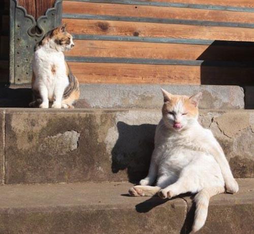 Γάτες που κάθονται σαν άνθρωποι (10)