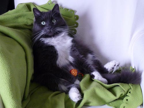 Γάτες που κάθονται σαν άνθρωποι (13)