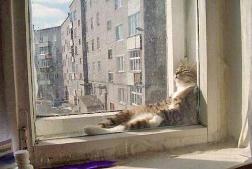 Γάτες που κάθονται σαν άνθρωποι (20)
