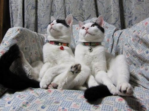 Γάτες που κάθονται σαν άνθρωποι (21)