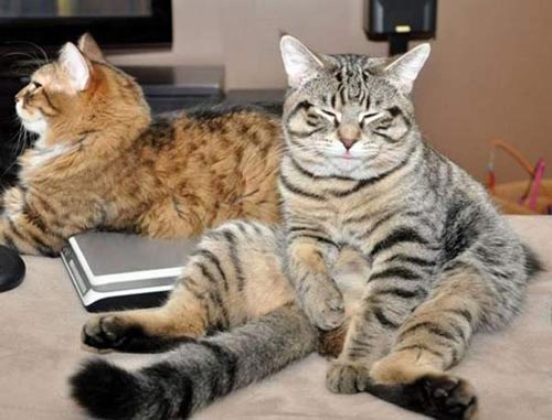 Γάτες που κάθονται σαν άνθρωποι (23)