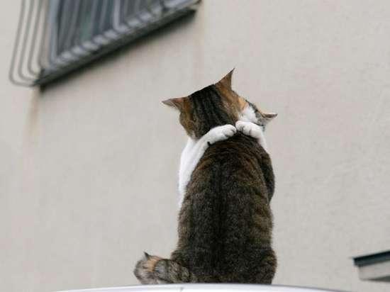 Γάτες που πιάστηκαν στα πράσα! (1)