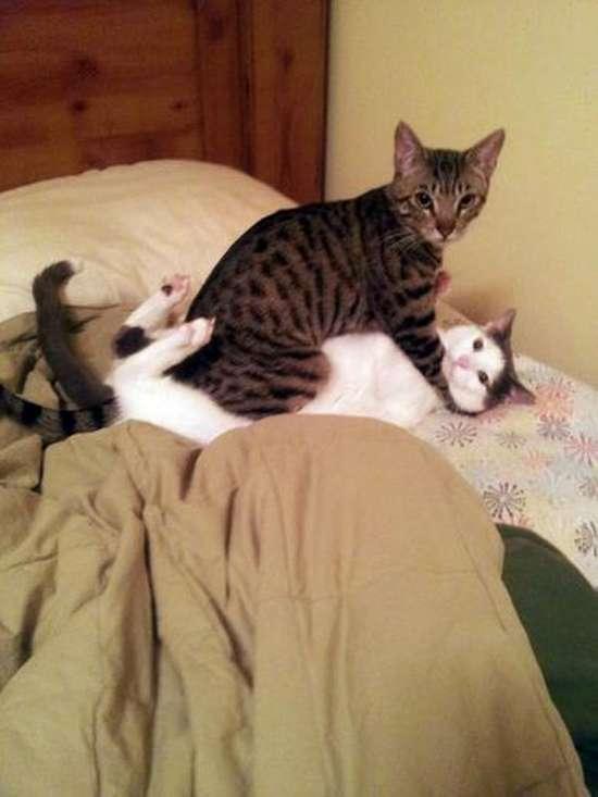 Γάτες που πιάστηκαν στα πράσα! (3)