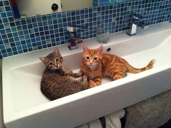Γάτες που πιάστηκαν στα πράσα! (4)