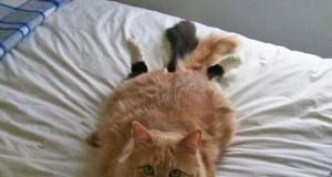 20 γάτες που πιάστηκαν στα πράσα!