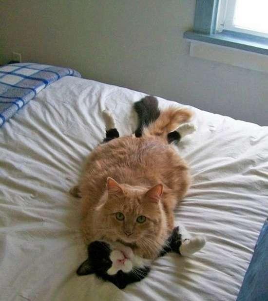 Γάτες που πιάστηκαν στα πράσα! (6)