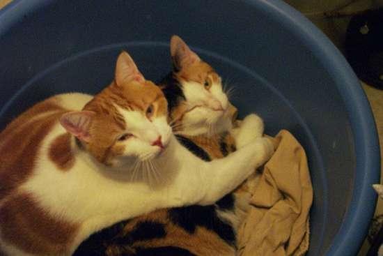 Γάτες που πιάστηκαν στα πράσα! (7)