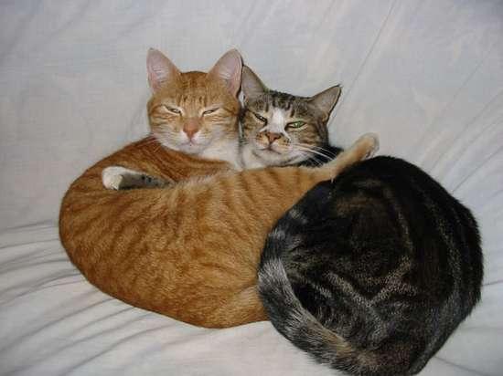 Γάτες που πιάστηκαν στα πράσα! (9)