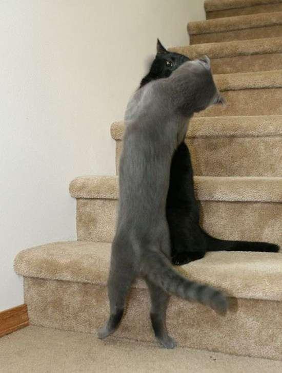 Γάτες που πιάστηκαν στα πράσα! (10)