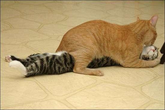 Γάτες που πιάστηκαν στα πράσα! (11)