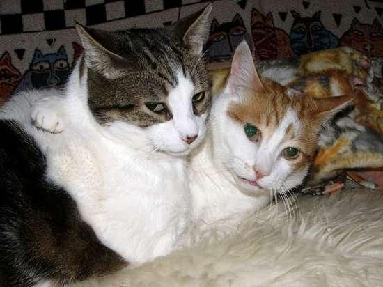 Γάτες που πιάστηκαν στα πράσα! (12)