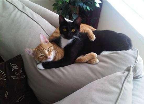 Γάτες που πιάστηκαν στα πράσα! (14)