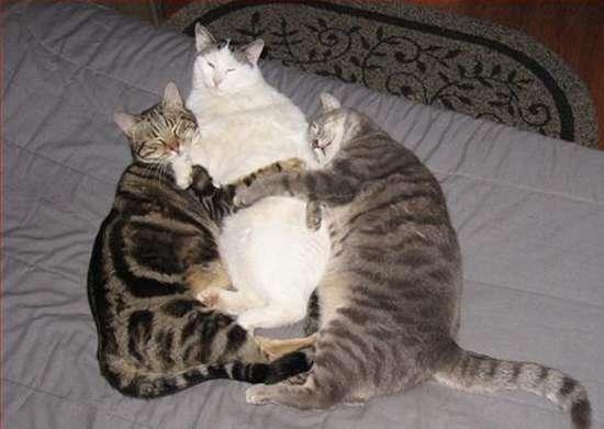 Γάτες που πιάστηκαν στα πράσα! (15)