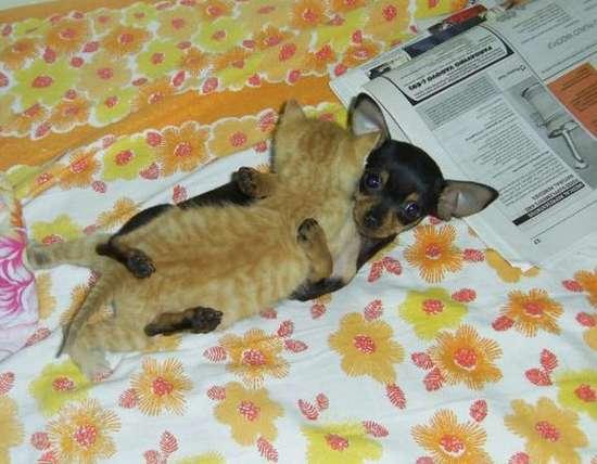 Γάτες που πιάστηκαν στα πράσα! (17)