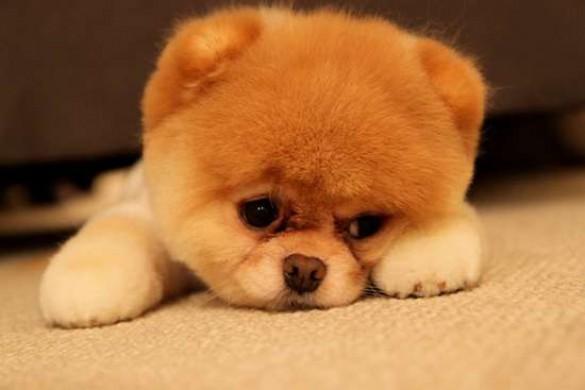 Λυπημένα κουτάβια (3)